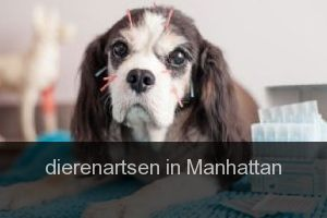 Dierenartsen in Manhattan